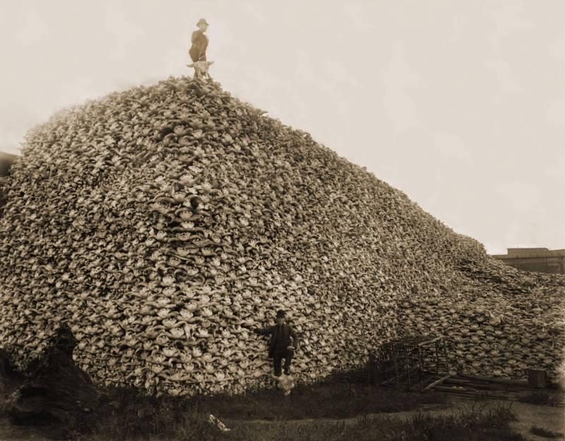 Пирамида из бизоньих черепов, 1870-е годы