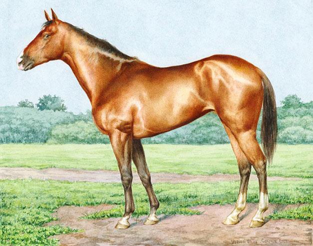 лошадь английская чистокровная