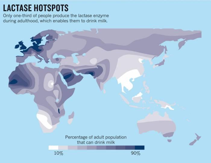 карта гена толерантности к лактозе