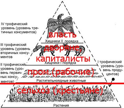 пищевая пирамида общества